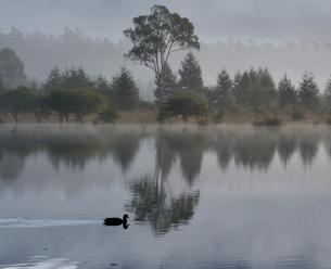 幻の湖を泳ぐ鴨の写真素材 [FYI00171894]