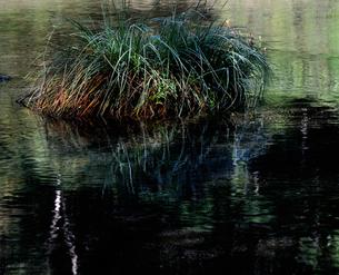 秋を待つ沼尻の写真素材 [FYI00171900]