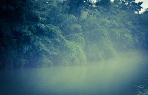 青い森の写真素材 [FYI00171927]