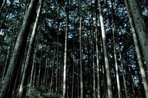 重厚な木々の写真素材 [FYI00171936]