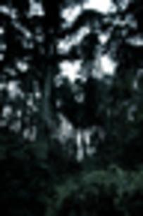 木の門の写真素材 [FYI00171944]