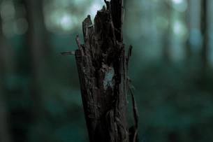 見つめる木の写真素材 [FYI00171945]