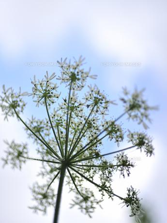 花の写真素材 [FYI00171990]