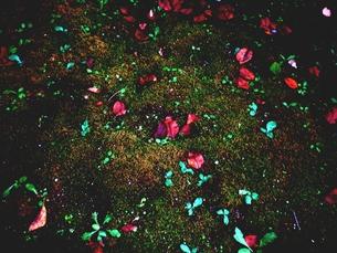 色々な色の落ち葉と草の写真素材 [FYI00172012]