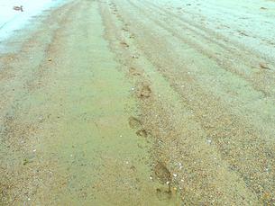 砂の上の足跡と鳥の写真素材 [FYI00172037]