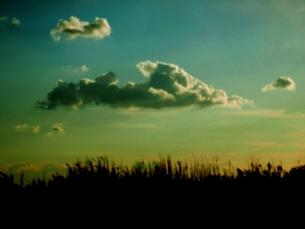 枯野の上の雲の素材 [FYI00172057]