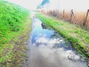 空を映す水たまりのある小道の写真素材 [FYI00172079]