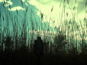 壊れた立札と枯れ草の写真素材 [FYI00172099]
