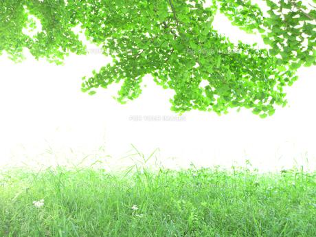 さわやかな新緑の入り口の写真素材 [FYI00172171]