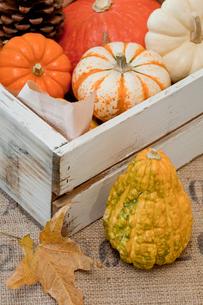 色々なかぼちゃの写真素材 [FYI00172201]