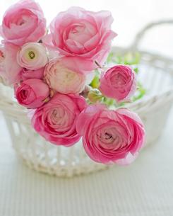 ピンクのラナンキュラスのブーケの写真素材 [FYI00172216]