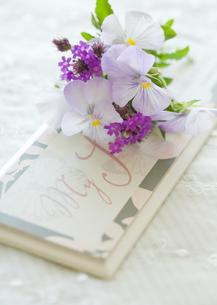 薄紫のパンジーの写真素材 [FYI00172223]