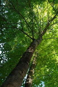 木の下での写真素材 [FYI00172334]
