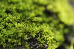 小さな苔の世界の写真素材 [FYI00172343]