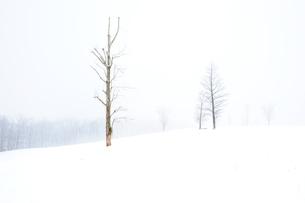 白銀の世界の写真素材 [FYI00172404]