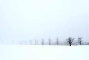 雪原の写真素材 [FYI00172430]