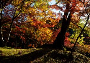 色つく秋の写真素材 [FYI00172440]