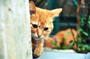 野良猫は見たの素材 [FYI00172444]