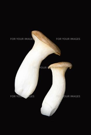 2つのエリンギの写真素材 [FYI00172517]