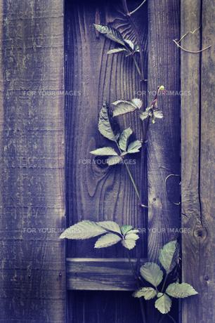 気の壁と葉の素材 [FYI00173232]