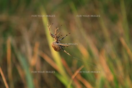 北海道の虫たち-1の写真素材 [FYI00173386]