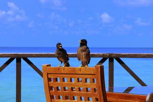 鳥の会話の写真素材 [FYI00173390]