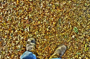落ち葉の写真素材 [FYI00173413]
