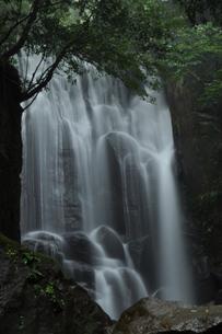 桑の木の滝の写真素材 [FYI00173582]