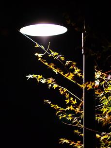 電灯とモミジの写真素材 [FYI00173677]