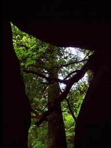洞から覗いた木の写真素材 [FYI00173678]
