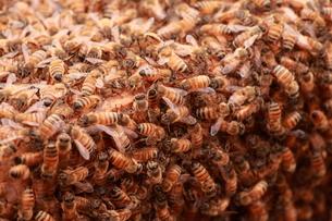 【養蜂】の写真素材 [FYI00173760]