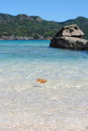 波乗り葉っぱくんと笑う岩くんの写真素材 [FYI00173821]