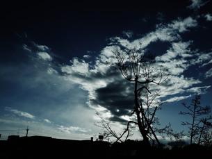 Fuyuの写真素材 [FYI00173844]