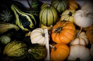 かぼちゃの写真素材 [FYI00173919]