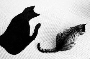 お食事中の猫の写真素材 [FYI00173923]