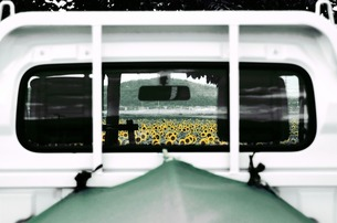 ガラス越しのヒマワリ畑の素材 [FYI00173932]