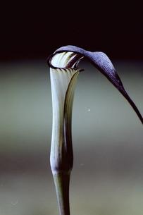ツルのクチバシの写真素材 [FYI00173987]