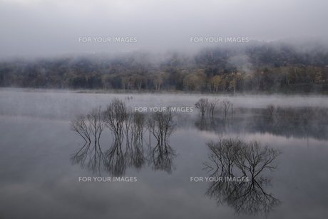 当別フクロウ湖の秋 の写真素材 [FYI00173999]