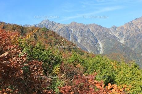 秋の白馬五竜遠見の写真素材 [FYI00174006]