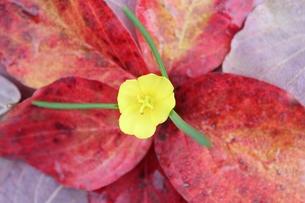 落ち葉の花の写真素材 [FYI00174013]