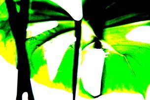 WONDERの写真素材 [FYI00174089]