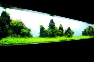 水中パノラマ2の写真素材 [FYI00174276]
