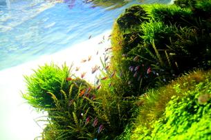 水中の楽園‐青空が見えた2‐の写真素材 [FYI00174287]