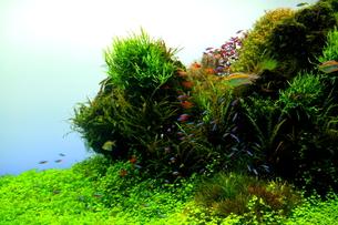 水中の楽園3の写真素材 [FYI00174291]