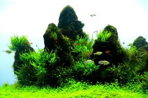 水中の楽園2の写真素材 [FYI00174305]
