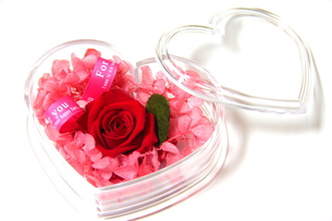 Love For You!の写真素材 [FYI00174503]