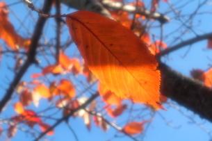 青空と橙の透過光の素材 [FYI00174634]