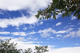 夏空の下での写真素材 [FYI00174850]
