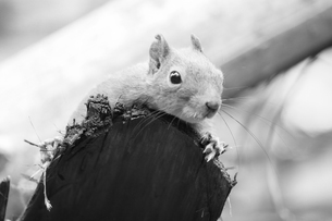 樹上のリスの写真素材 [FYI00174855]