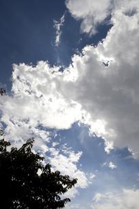 夏空の写真素材 [FYI00174870]
